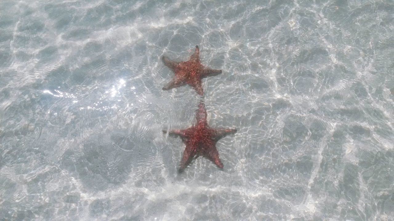 star couple Nature Nature Photography Natural Beauty Couple Photography Star Stars Starfish  Starfish At Beach Starfishes