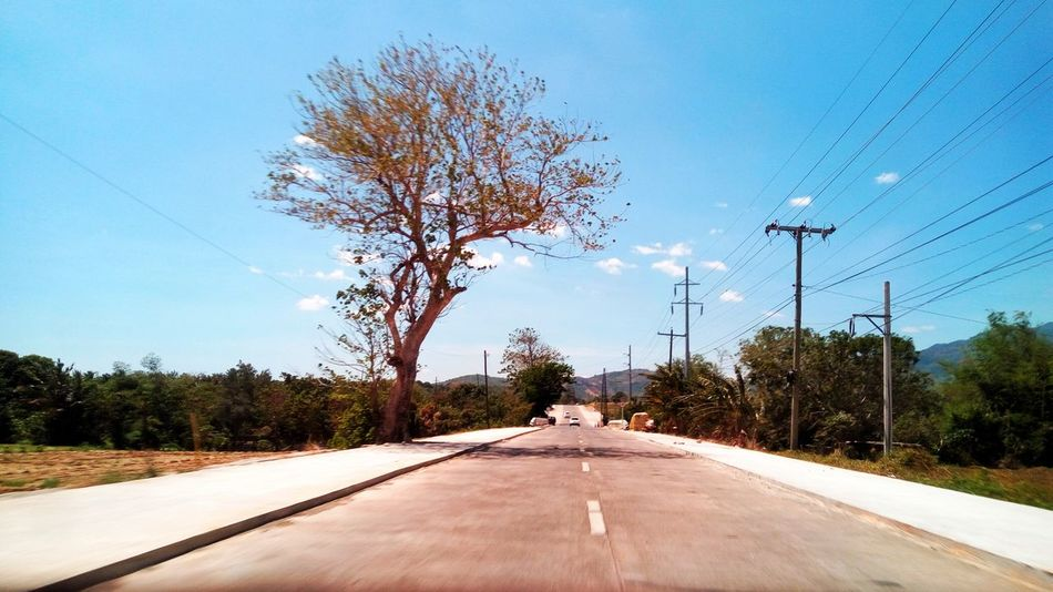 Road Tree The Way Forward Transportation Street Outdoors Day Sky No People Road Sign Telephone Line Electricity Pylon Nature