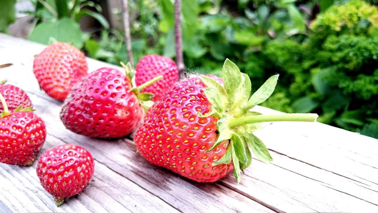 Red Love /// Erdbeeren aus dem eigenen Hochbeet im Urban Garden. Gereift von der Sonne und 100% Bio gewachsen. Food Strawberry Red Wellness