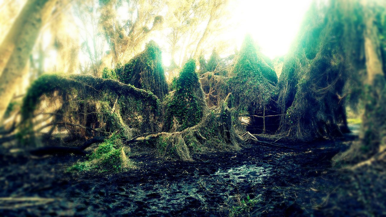 The secret garden of perth after the rains of winter. Close-up Green Color Moss Growth Selective Focus Nature Tree Trunk Full Frame Growing Green No People Tranquility Plants Water River Hanging Out Enjoying Life Aliceinwonderland Secret Places Secret Gardens Lgg5photography Western Australia