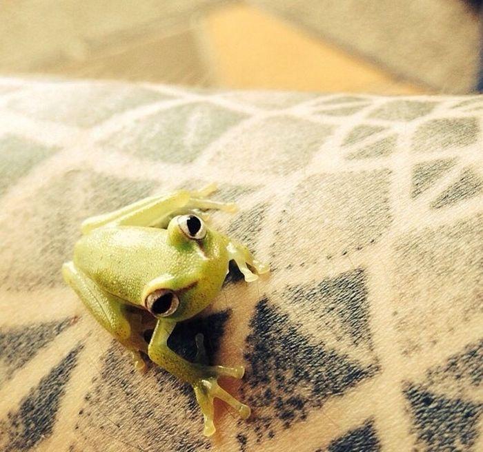 Biología de vertebrados... Día de anfibios! Frog Anphibian Anfibio Rana Animal