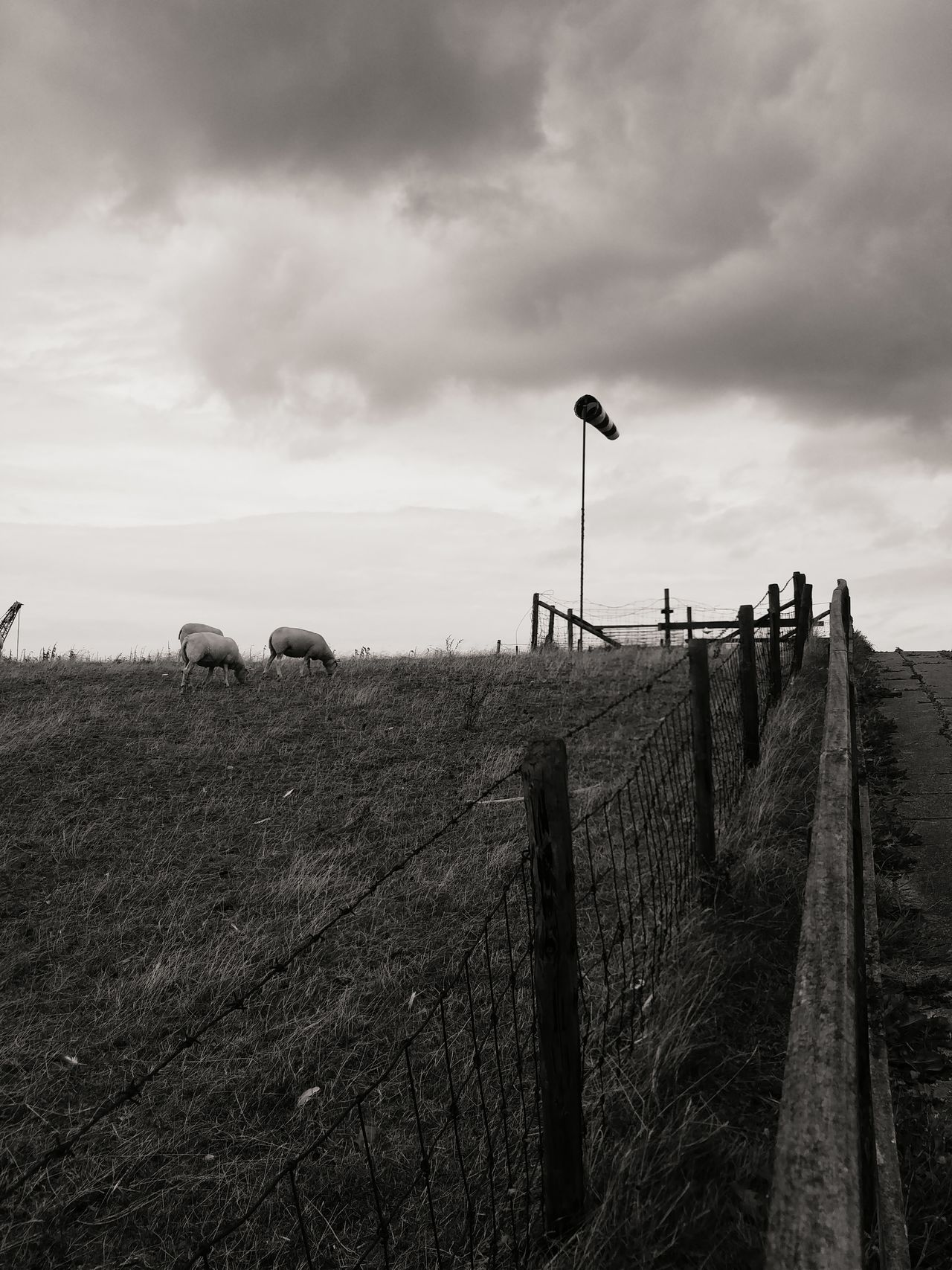 Zeeland  Visslingen Sky And Clouds Sky Outdoors Sheep Northsea Westerschelde