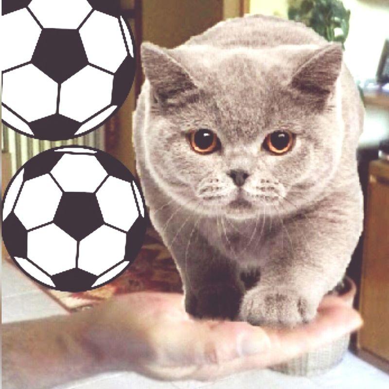 Cats Gatto Grigio Sulle Mani Slalom Salto In Lungo EyeEm Gallery Italy