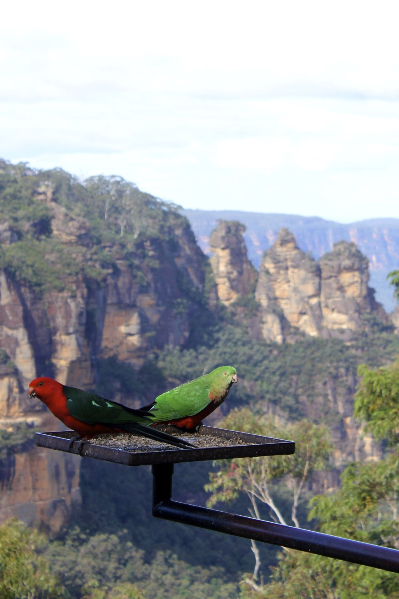 Parrots at the Three Sisters in the Blue Mountains, Australia The Three Sisters Blue Mountains Australia Stuart Brown Photography
