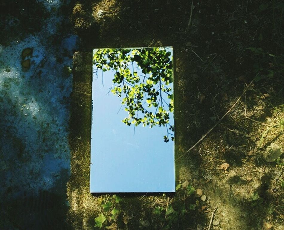 nature in glass ... Tree Outdoors Nature Green Leaf Freshness Sky Flower Head Beauty In Nature Creativity