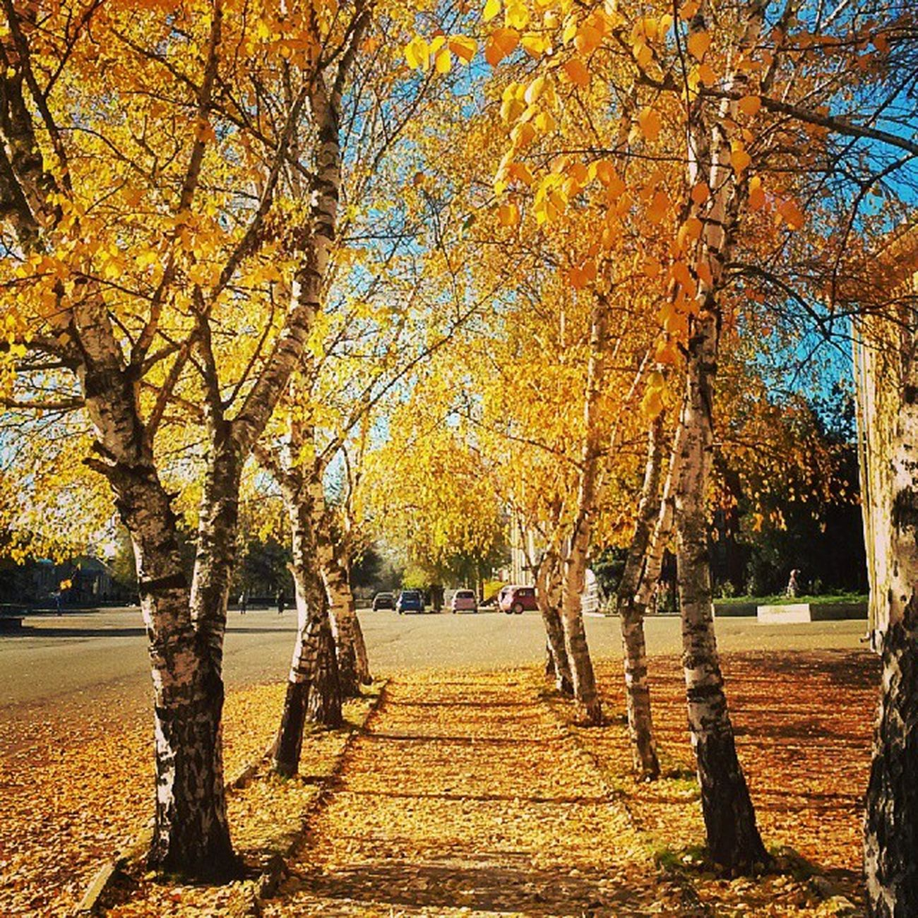 Golden Russian autumn. Fall Autumn Leaves Tagsforlikes falltime season seasons instafall instagood TFLers instaautumn photooftheday leaf foliage colorful orange red autumnweather fallweather nature Russia
