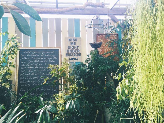 わたしのすきな場所 First Eyeem Photo Plant Green Love Healing Healing Place  Japan