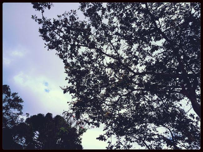 Walking Around Hugging A Tree Skyporn Sunset #sun #clouds Skylovers Sky Natu Re Beautifulinnature Naturalbeauty Photography Landscape [ [a:
