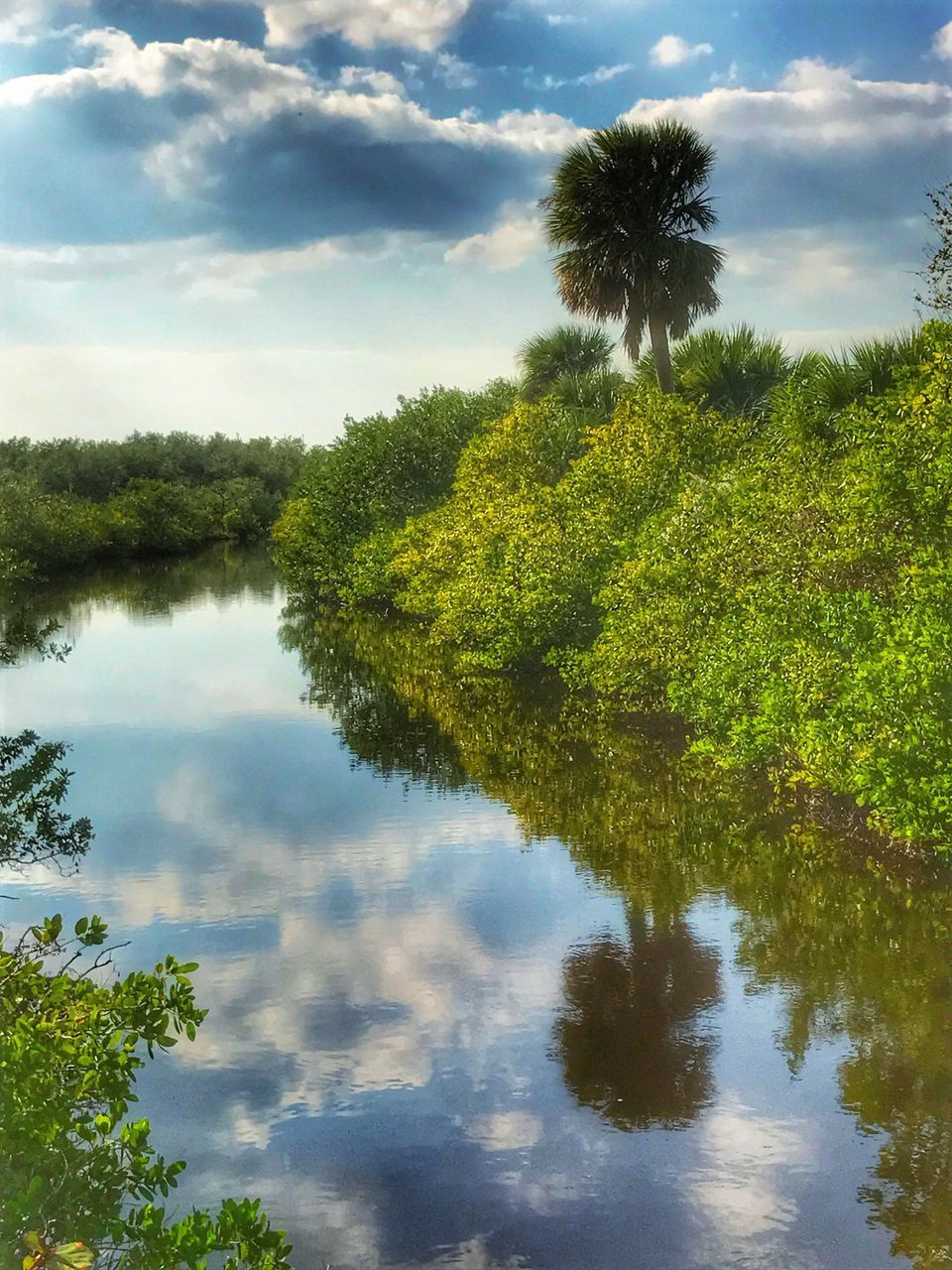 tree, sky, nature, beauty in nature, growth, cloud - sky, reflection, scenics, water, tranquility, green color, tranquil scene, green, outdoors, day, no people, plant, palm tree, leaf