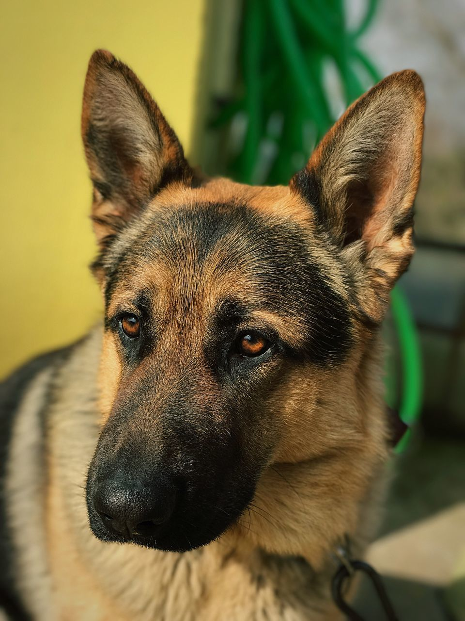 animal themes, dog, one animal, pets, mammal, domestic animals, focus on foreground, close-up, no people, portrait, looking at camera, day, indoors