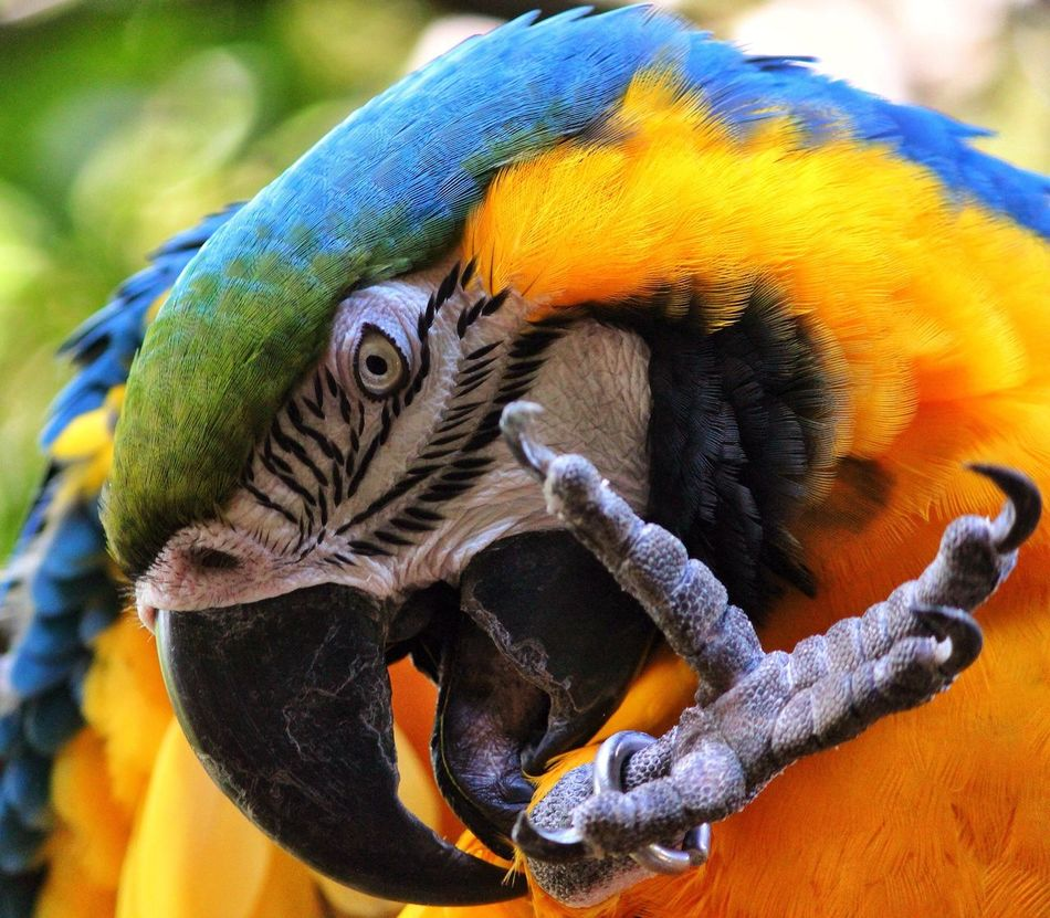 Beautiful stock photos of parrot, Animal Head, Animal Leg, Animal Themes, Animals In The Wild