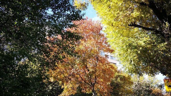 Autumn Beauty In Nature