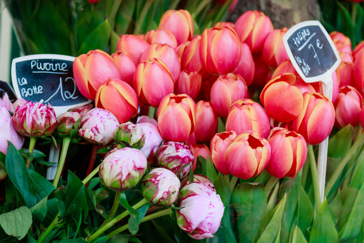 Close-Up Of Pink Flowers For Sale In Market
