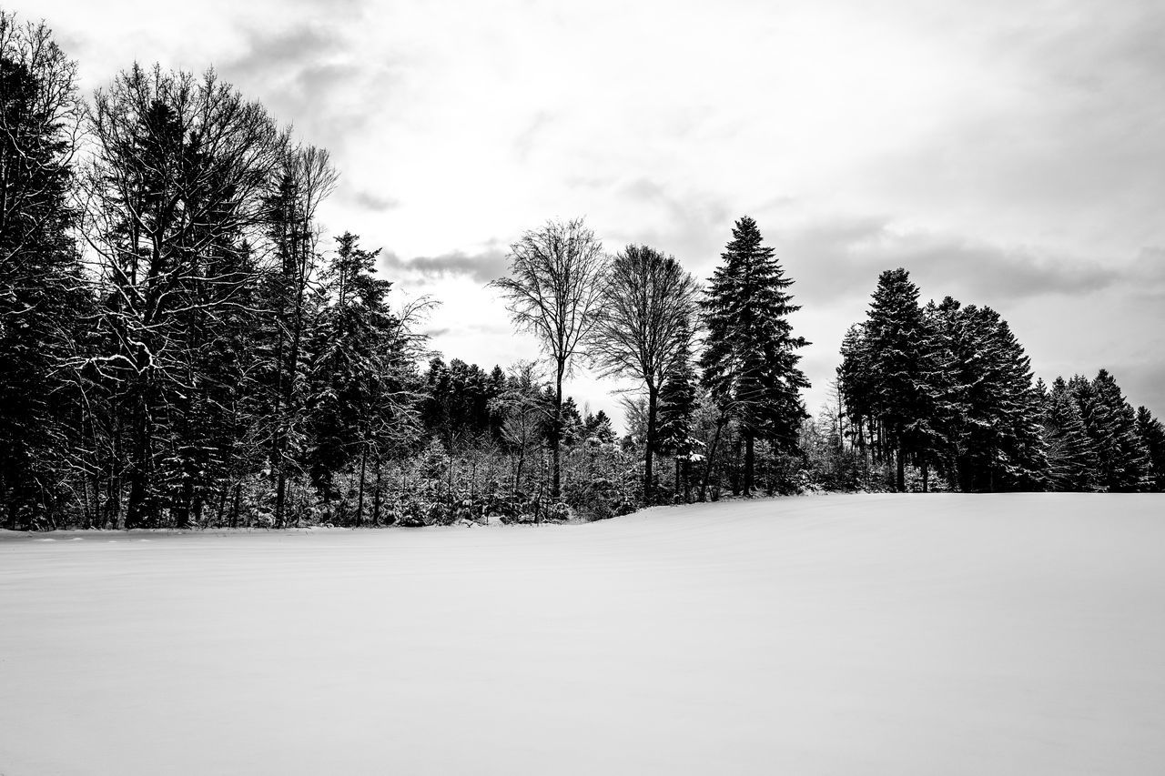 winter, snow, cold temperature, tree, nature, tranquility, weather, beauty in nature, sky, tranquil scene, cloud - sky, outdoors, scenics, no people, landscape, day, bare tree