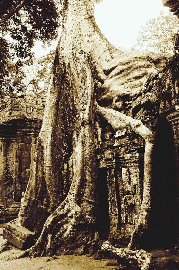 Ta Prohm Nature in Cambodia Monochrome