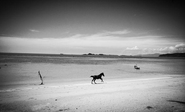 ko Samui morning beach yoga ... Aug 2013 First Eyeem Photo Horse Beach Thailand Black & White Blackhorse BlackBeauty Kosamui Yoga Chillin' IPhoneography