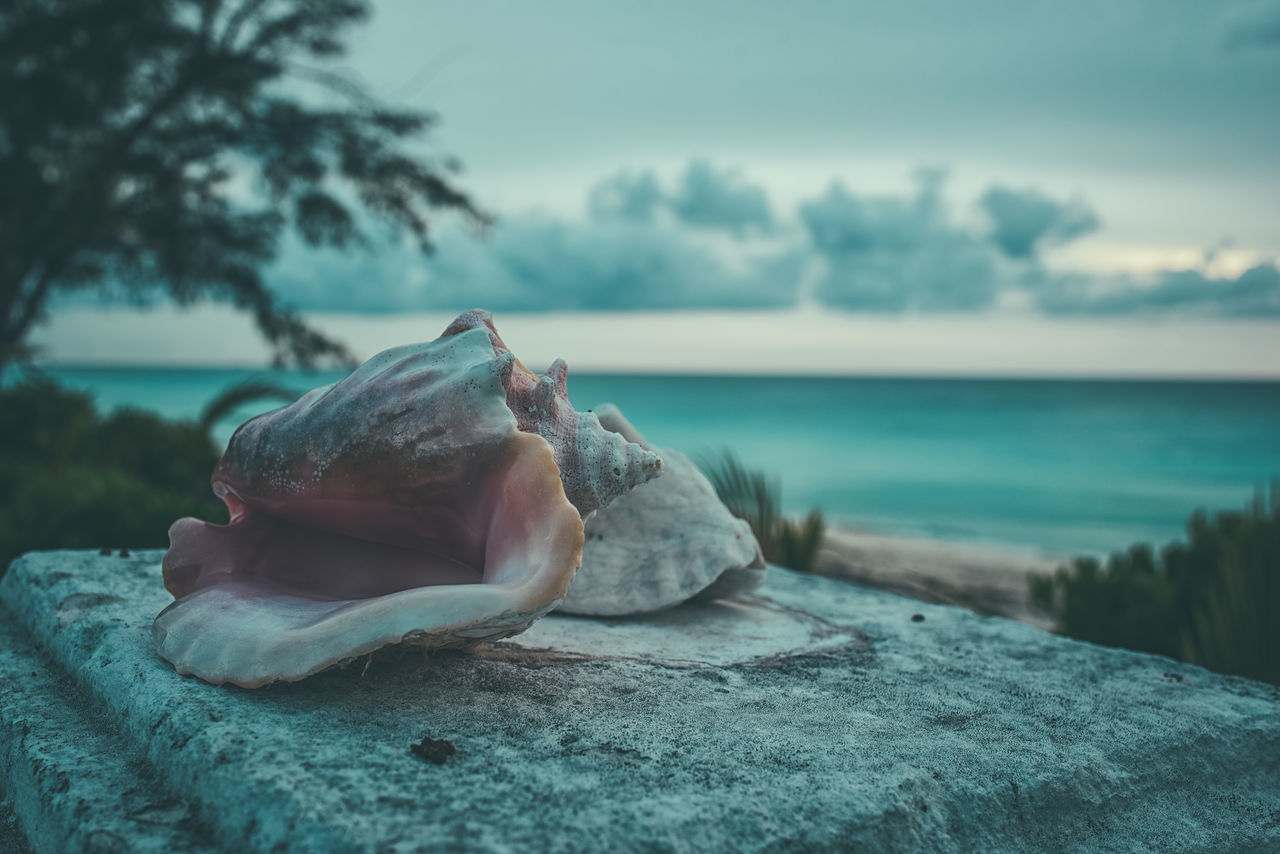 Made by the Sea Animal Themes Beauty In Nature Bimini Close-up Conch Shells Day Horizon Over Water Mammal Nature No People Ocean View Outdoors Photographyisthemuse Queen Conch Sea Seashells Sky The Bahamas Travel Destinations Travel Photography Tree Turquoise Water Water