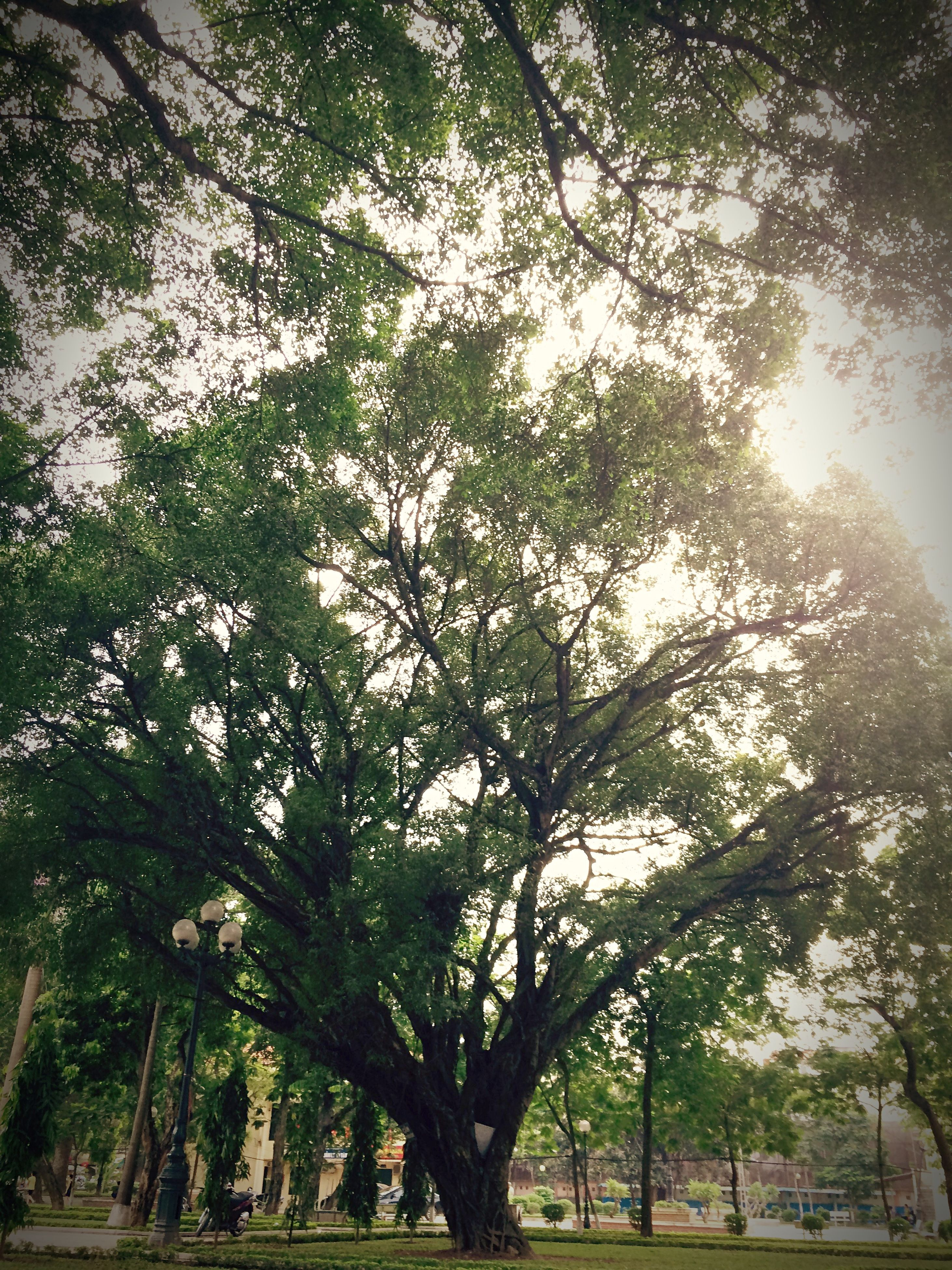 tree, growth, branch, nature, tranquility, tree trunk, beauty in nature, park - man made space, green color, sunlight, tranquil scene, low angle view, scenics, day, outdoors, sky, growing, sunbeam, plant, park