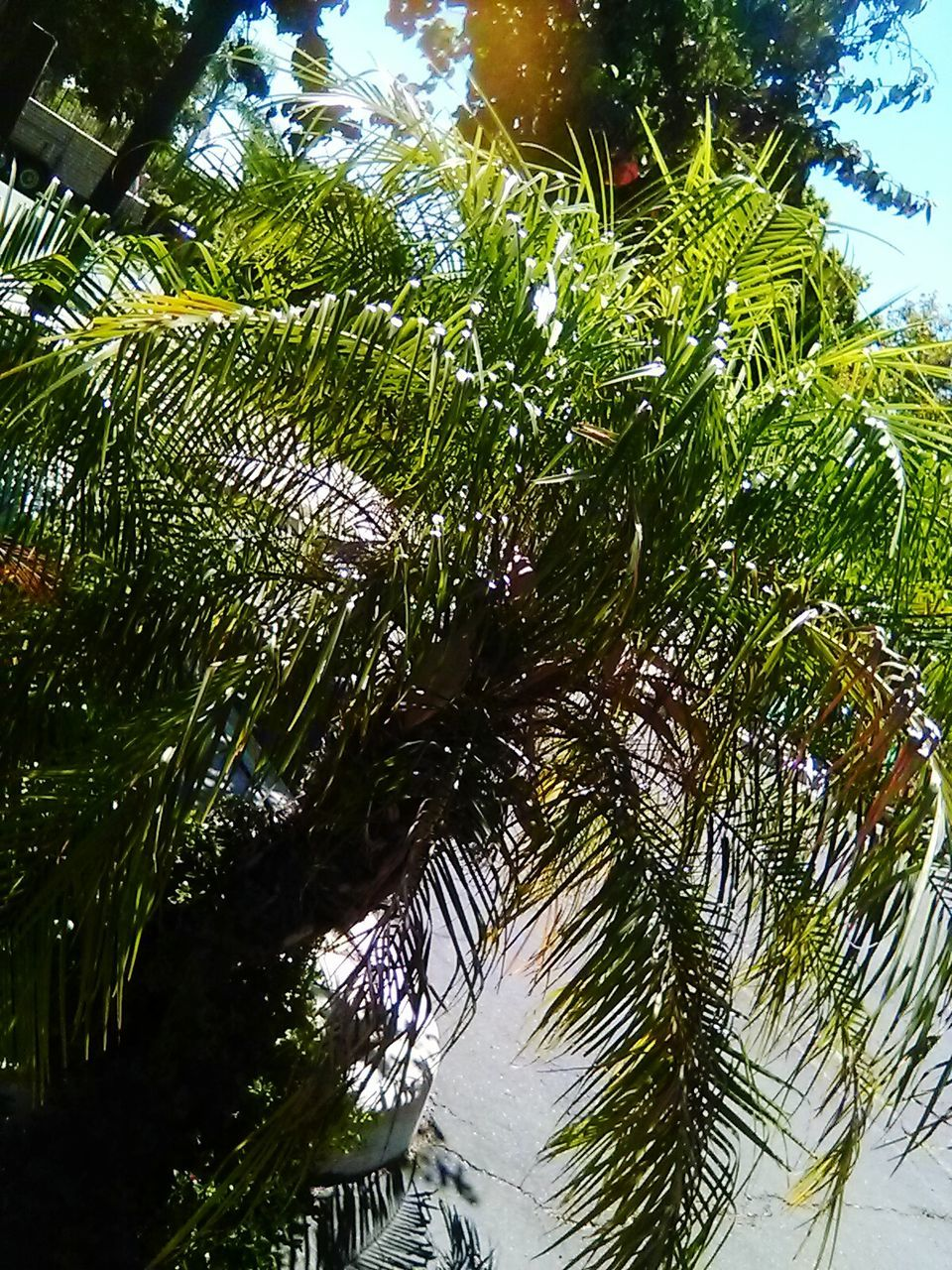 tree, low angle view, growth, nature, palm tree, day, no people, beauty in nature, outdoors, sky, close-up