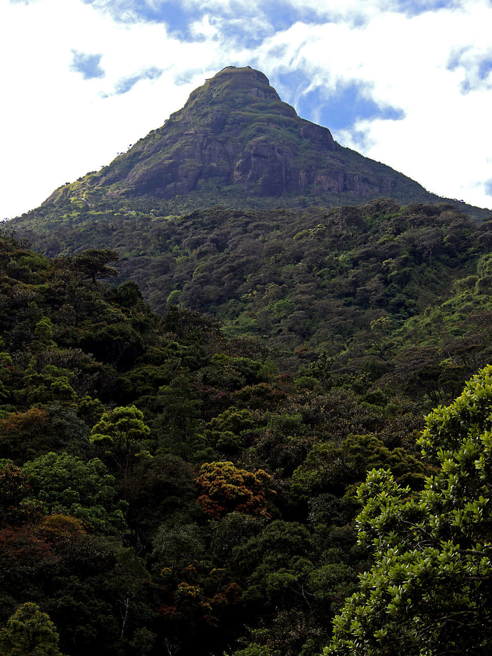 mountain, beauty in nature, nature, tranquility, day, scenics, tranquil scene, outdoors, sky, no people, tree, landscape