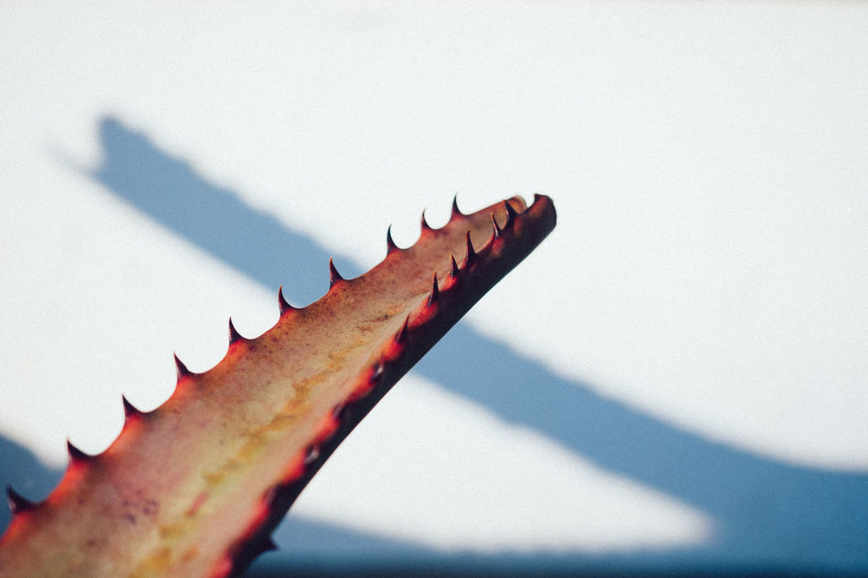 Beautiful stock photos of teenager,  Cactus,  Danger,  Day,  Horizontal Image
