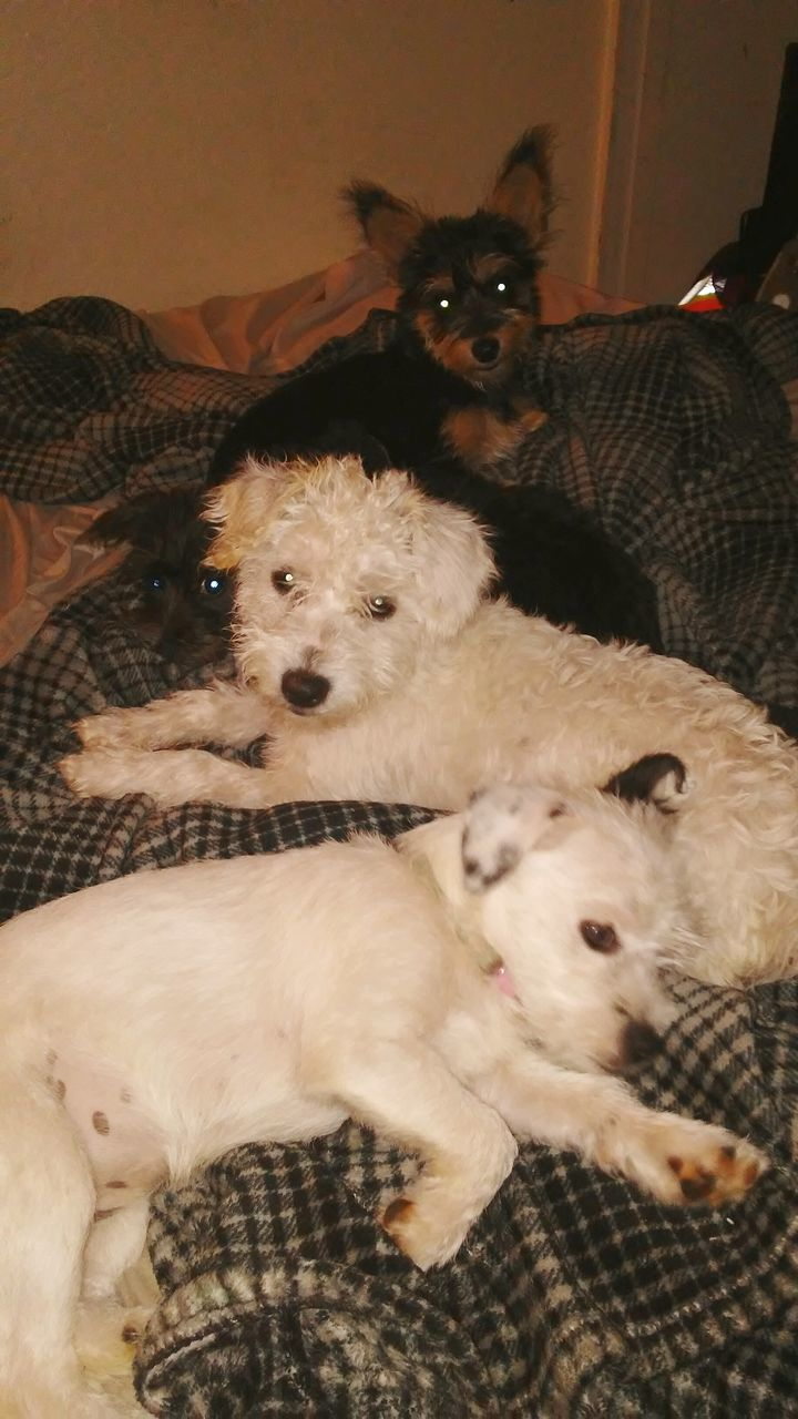 domestic animals, animal themes, mammal, indoors, pets, togetherness, young animal, dog, no people, nature, day, close-up