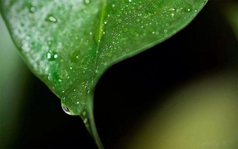 Macro Photography Water Drops Macro Snapshot