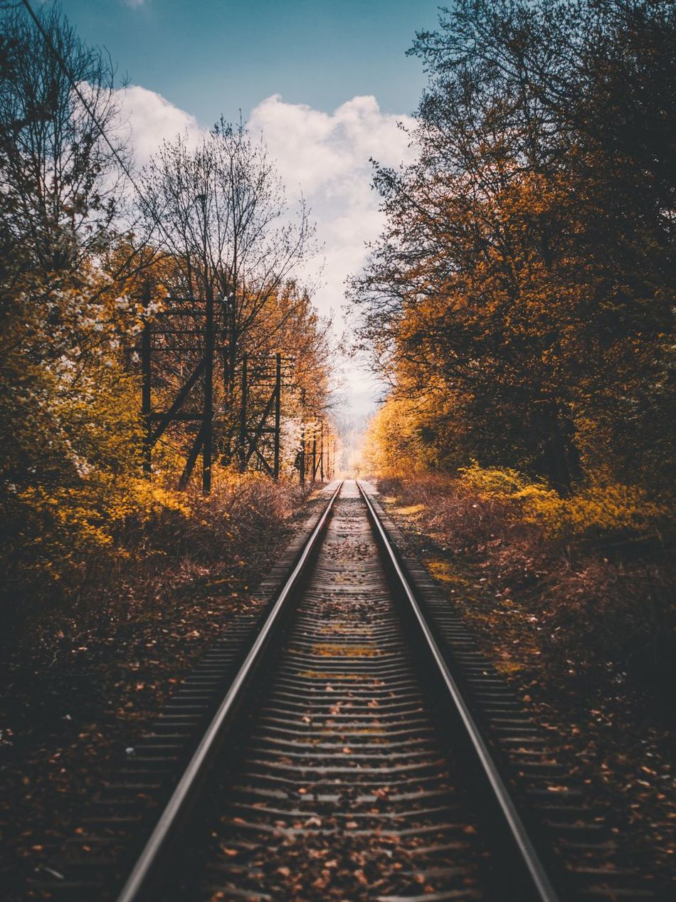 Tree Change The Way Forward Leaf Nature Transportation Diminishing Perspective Beauty In Nature No People Railroad Track Rail Transportation Outdoors Tranquil Scene Scenics Day Tranquility Sky Growth Branch