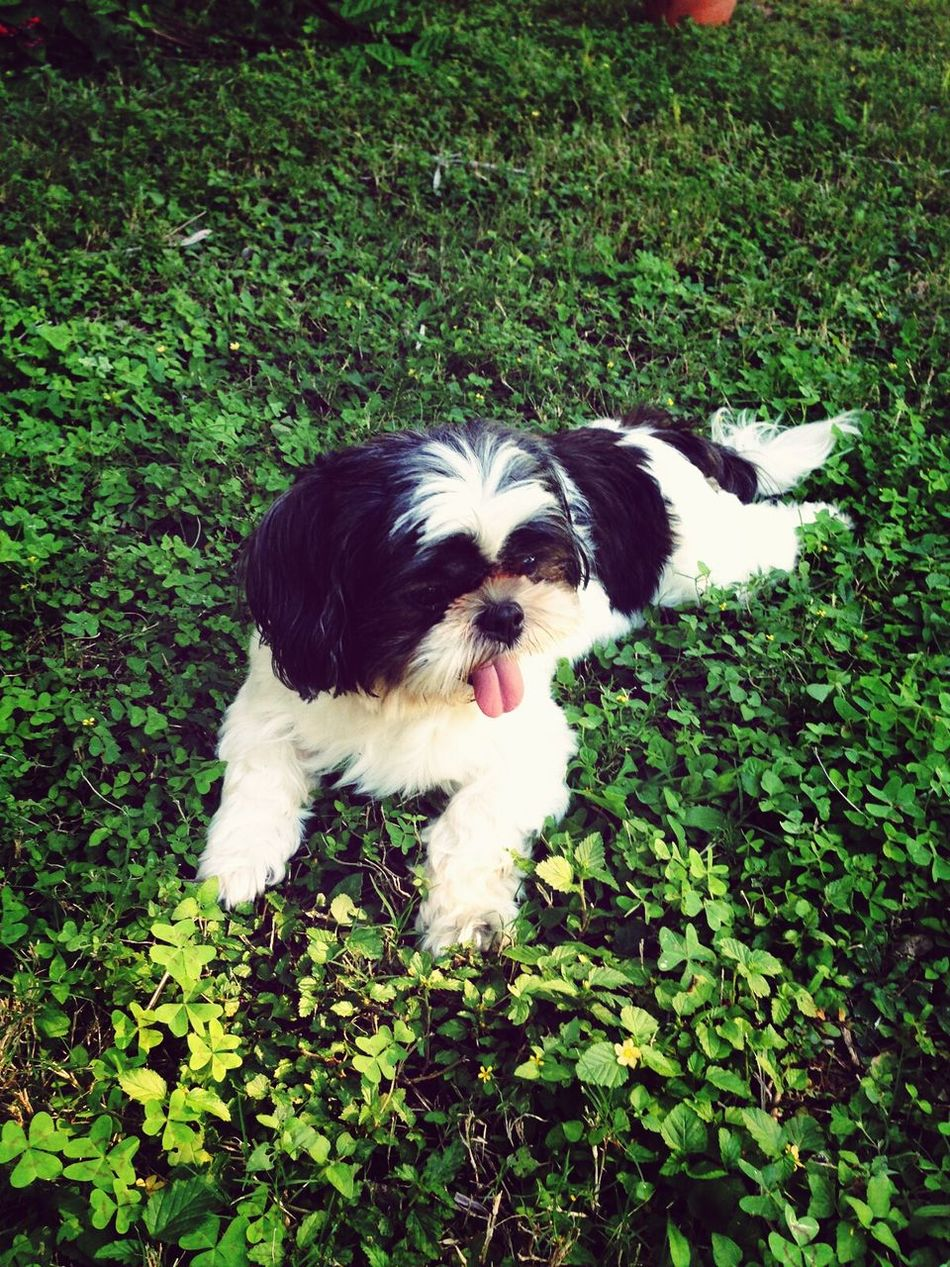 My beutiful dog, bruno That's Me Dog Love Animals Playing With The Animals