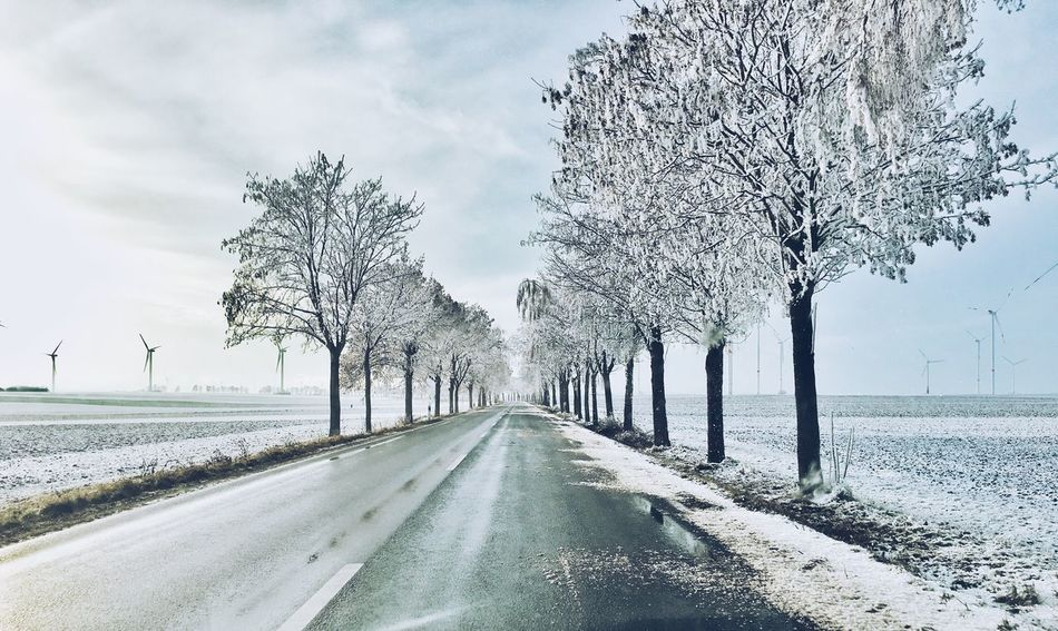 Tree Nature Treelined The Way Forward Tree Trunk Bare Tree Tranquility Branch Outdoors Day Road Snow Landscape Sky Cold Temperature No People Beauty In Nature Scenics