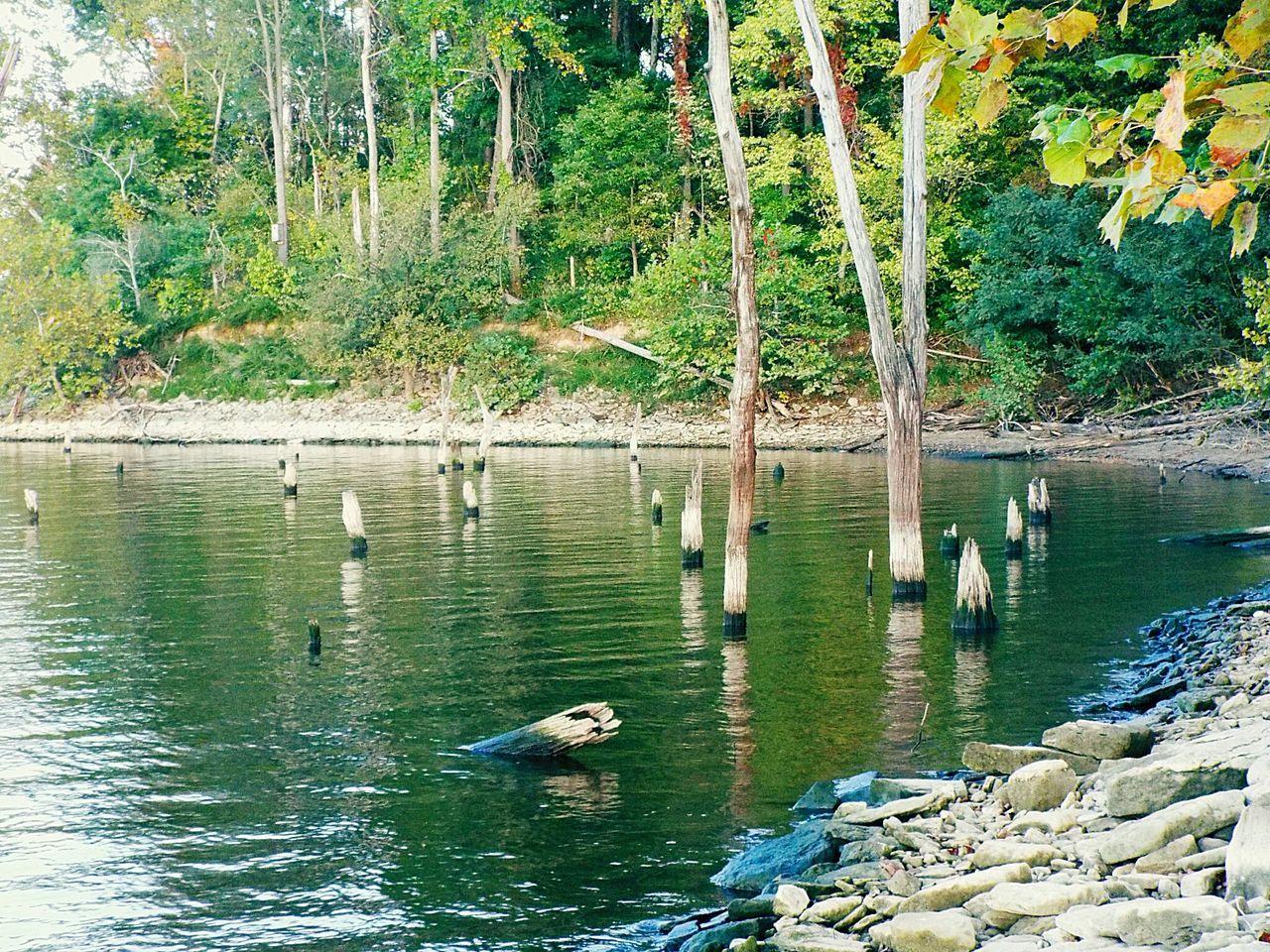 water, animal themes, animals in the wild, nature, lake, tree, swimming, day, one animal, outdoors, duck, waterfront, beauty in nature, bird, no people, animal wildlife, water bird, swan, scenics, mammal