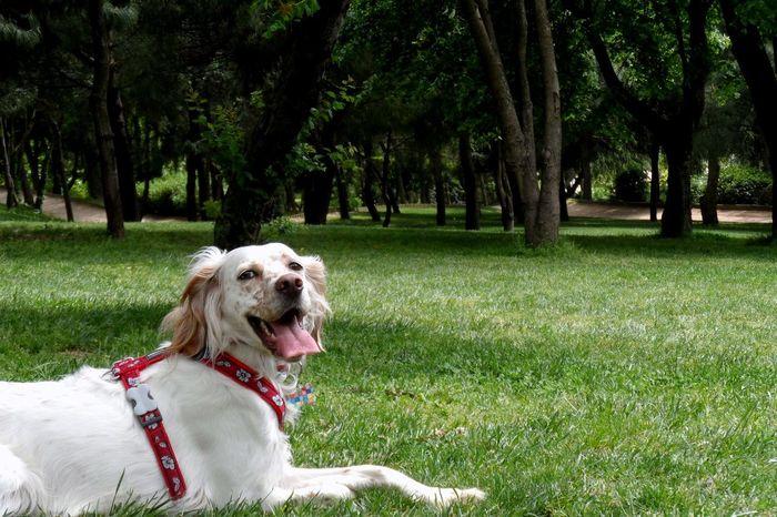 City Life City Park Cityscapes Dog English Setter Grassy I Am Happy (: Istanbul Park Springtime Week On Eyeem