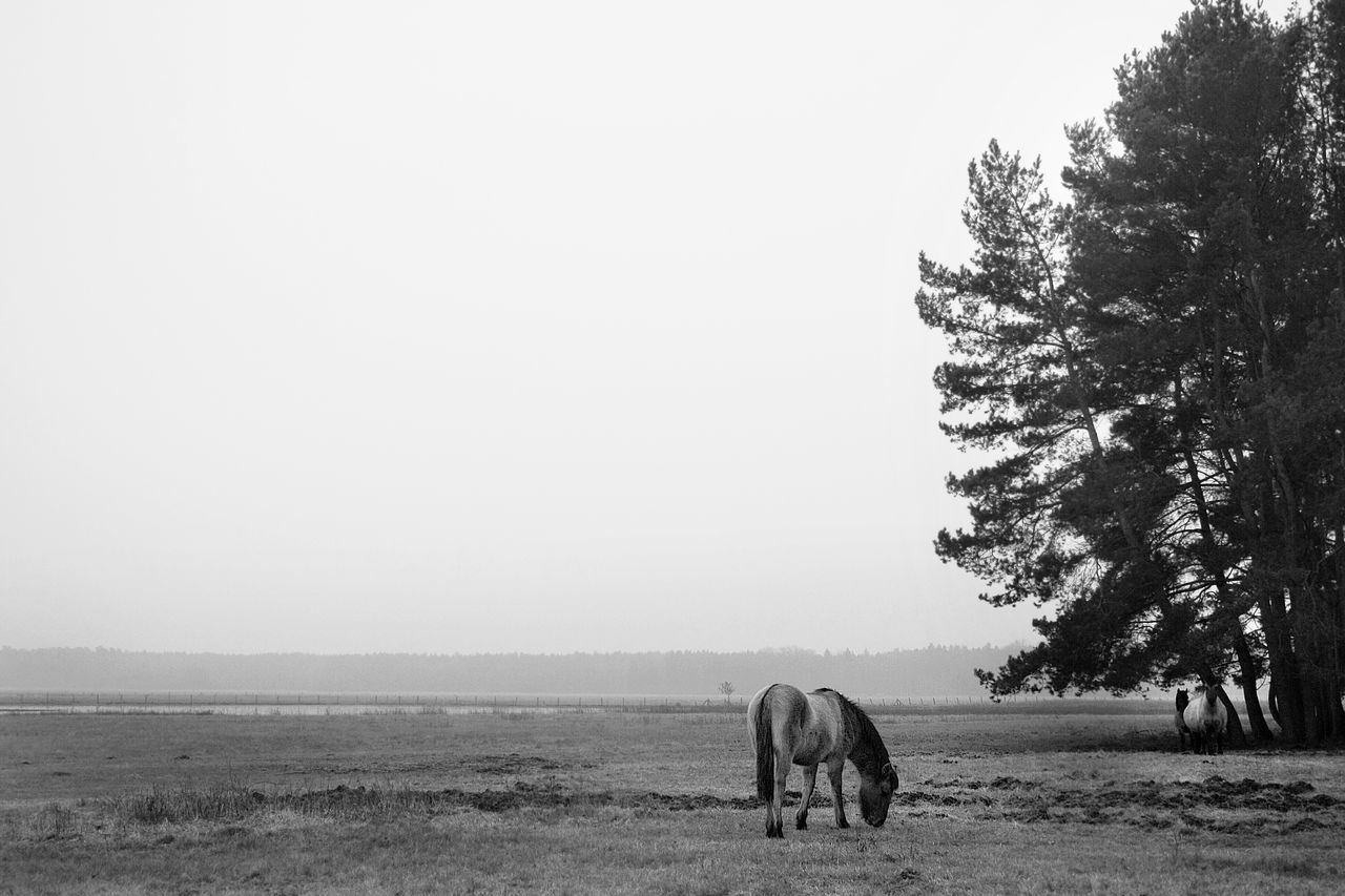 The EyeEm Facebook Cover Challenge Landscape Horse Nature_collection Nature EyeEm Nature Lover Monochrome Blackandwhite Black And White Animals Monochrome Photography