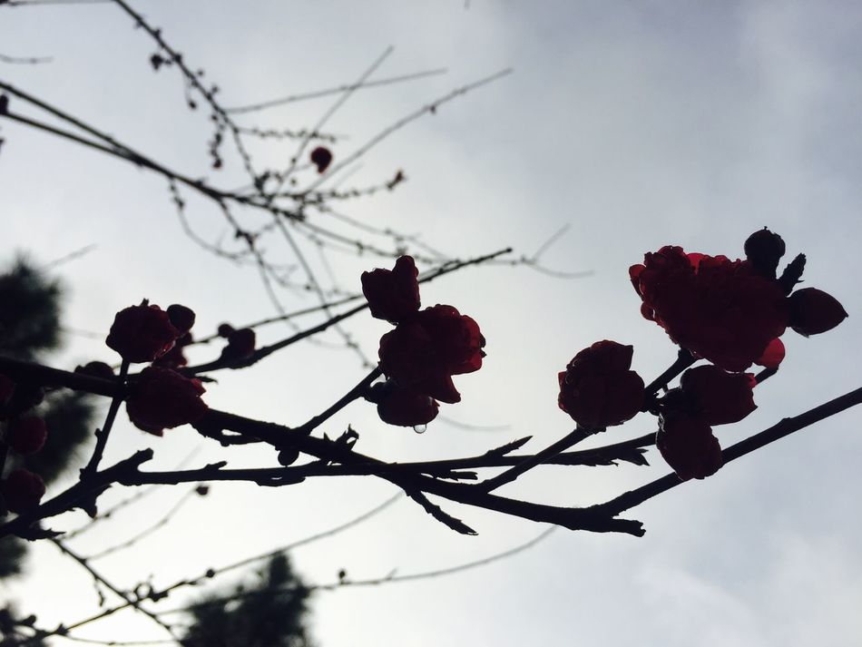 Nature Growth Beauty In Nature Flower Freshness Outdoors Branch Plum Blossom Flower Head Fresh Scent Outdoor Photography LIKE IT! Relaxing Enjoying Life Beautiful Day Spring Is Coming