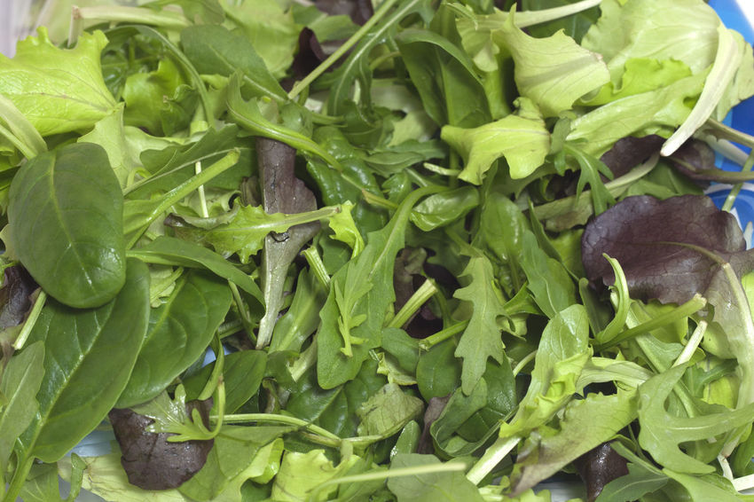 salad, clean, in bag, two-tone Close-up Food Freshness Healthy Eating No People Purchase, Retail, Paper, Market, Organic, Retailer, Sale, Trade, Vegetables, Consumers, Customer, Business, Farm, Lettuce, Green, Food, Fresh Purchase, Retail, Paper, Market, Organic, Retailer, Sale, Trade, Vegetables, Consumers, Customer, Business, Farm, Lettuce, Green, Food, Fresh,