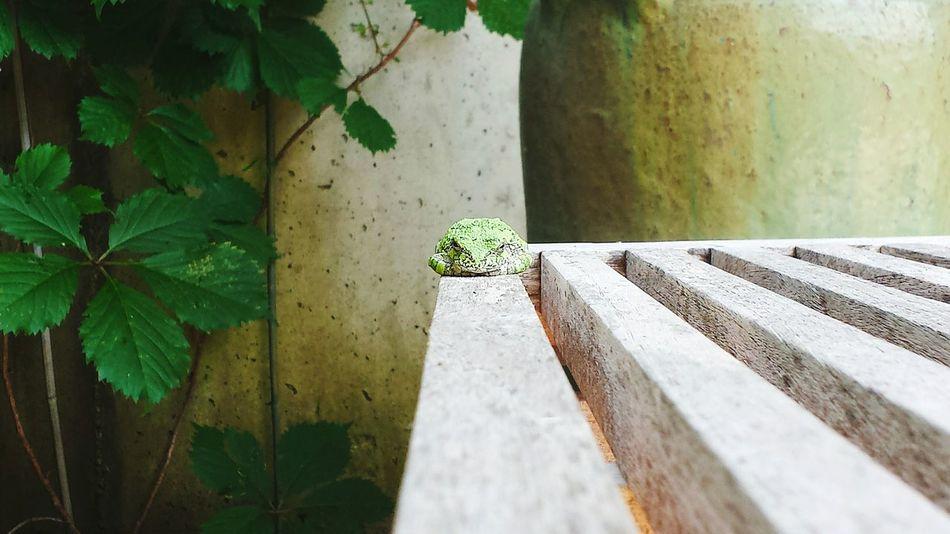 Beautiful stock photos of frog, Animal Themes, Beige, Botany, Day