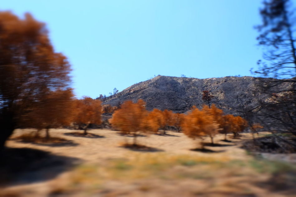 After The Fire Autumn Branch Countryside Day Landscape Long Mountain Nature No People Non-urban Scene Orange Color Outdoors Pine Tree Remote Scenics Selective Focus Solitude Tranquil Scene Tranquility Tree