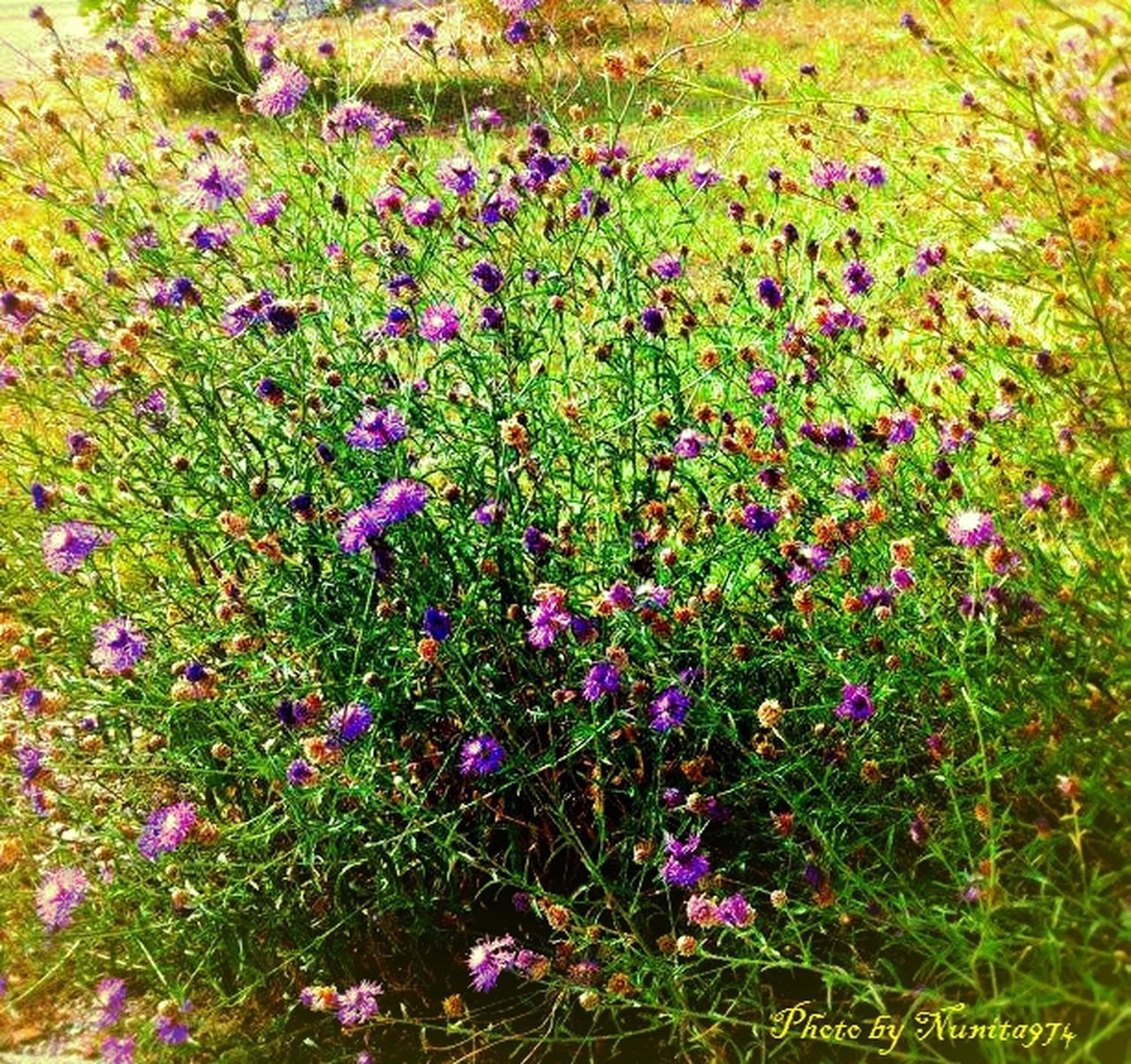 growth, flower, nature, beauty in nature, plant, field, purple, grass, no people, leaf, fragility, tranquility, outdoors, green color, day, multi colored, blooming, freshness, close-up