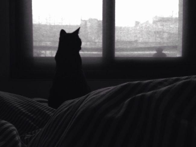 Rainy day Blackandwhite Cats Rain