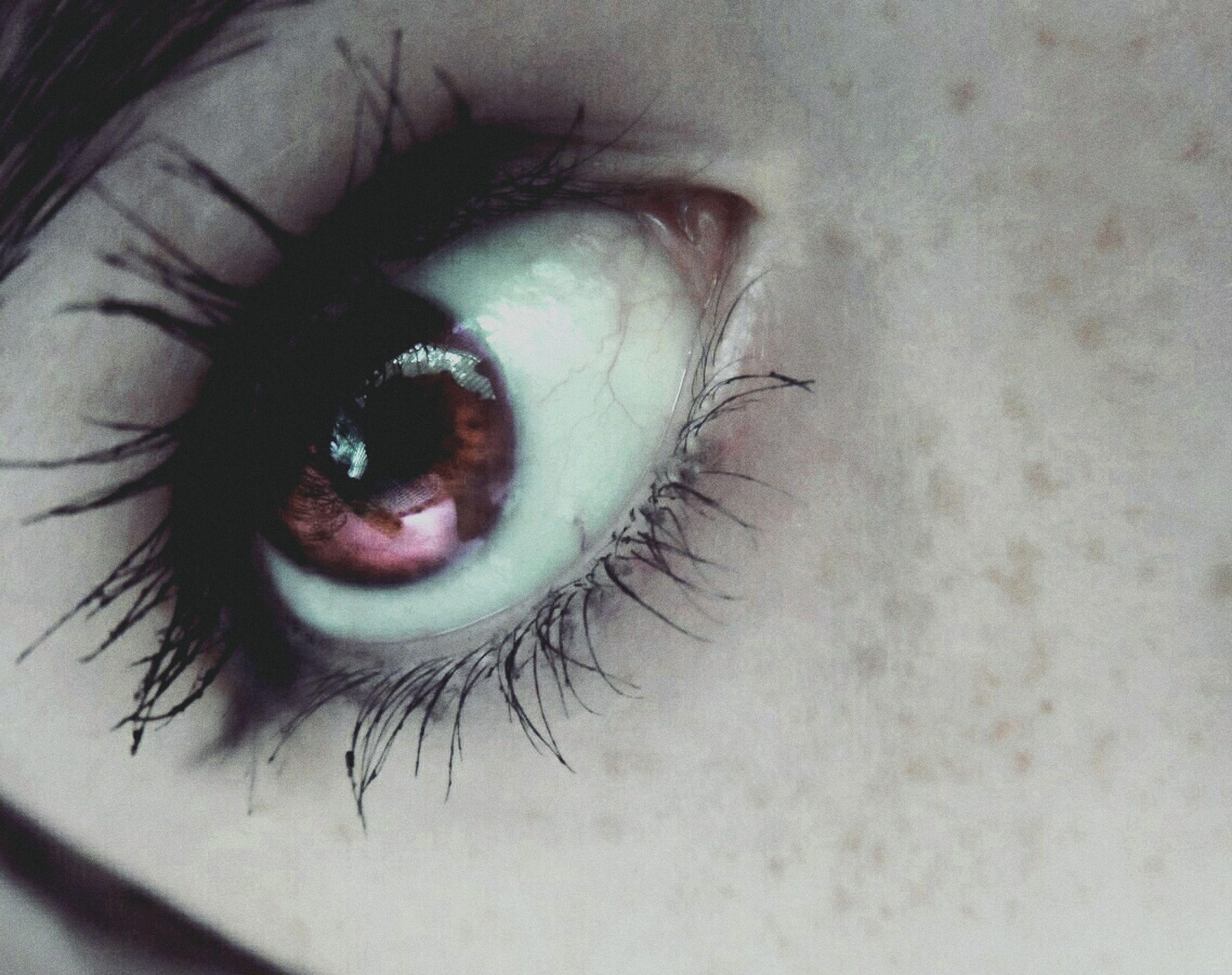 close-up, human eye, part of, eyelash, sensory perception, eyesight, unrecognizable person, eyeball, extreme close-up, portrait, extreme close up, human skin, cropped, lifestyles, animal body part, detail, selective focus, macro, human face, focus on foreground
