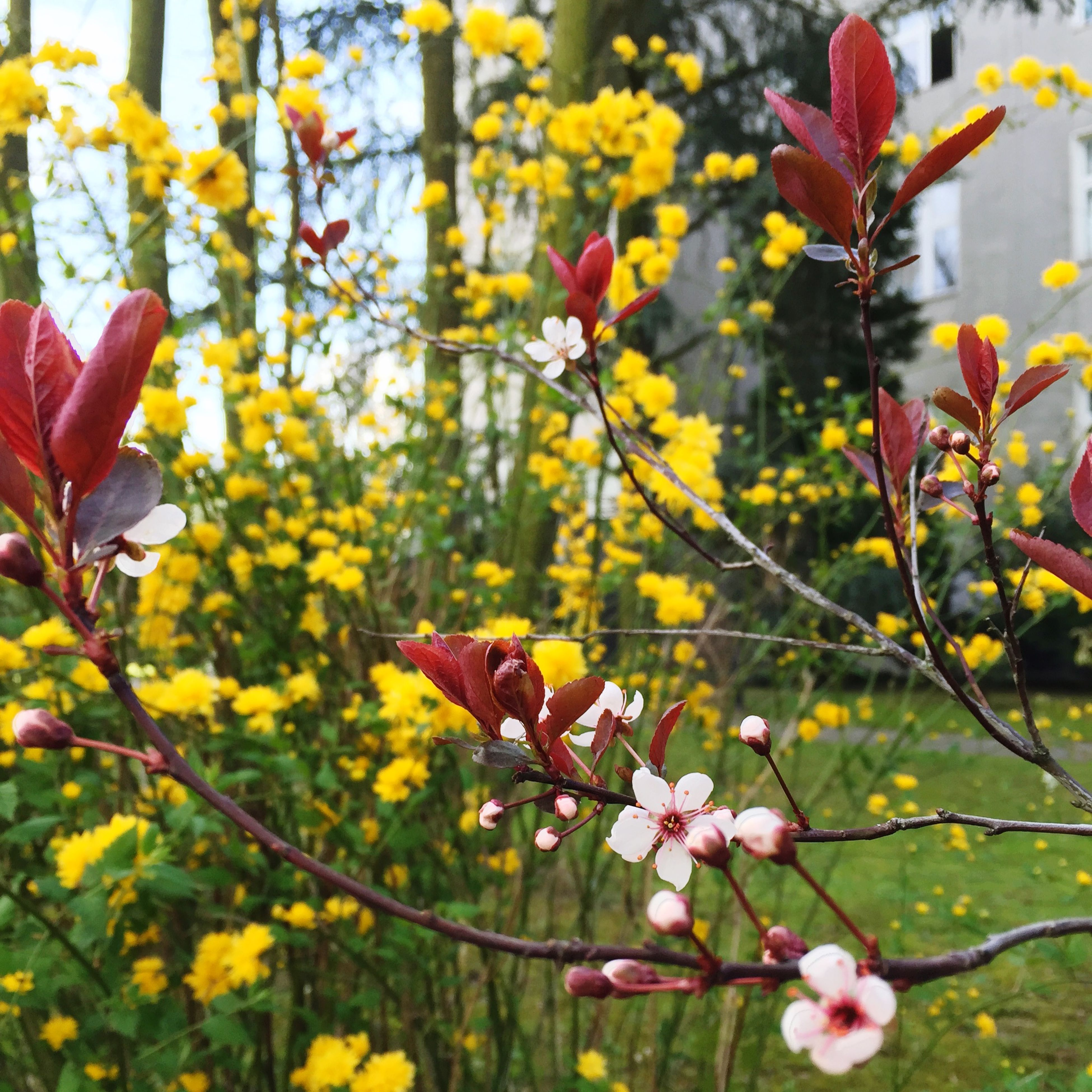 flower, freshness, growth, fragility, petal, yellow, beauty in nature, nature, focus on foreground, blooming, branch, close-up, blossom, flower head, in bloom, plant, springtime, stem, pink color, tree
