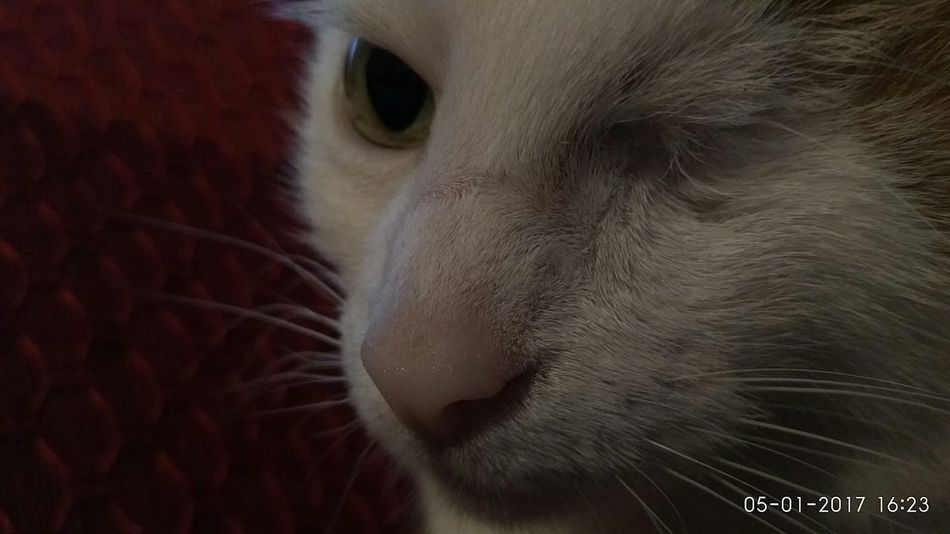 Thecat Andy Sweetestcatonearth Details Whitecatphotography Whitecat