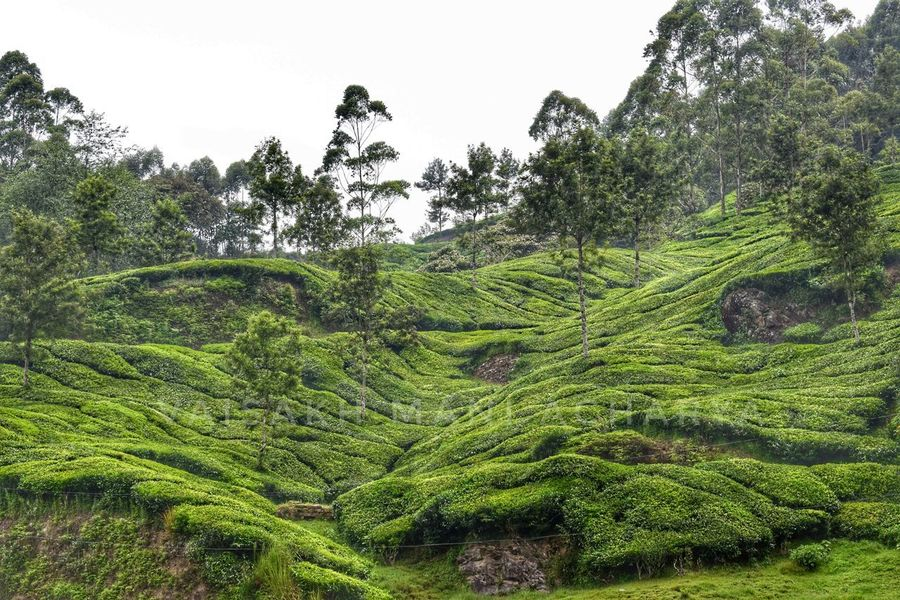 Nature Green Color Tree No People Growth Outdoors Day Beauty In Nature Sky Water Freshness Landscape Landscape_Collection Landscape_photography Teaestates Teaestate Munnar MunnarHillstation Kerala, India Kerala The Gods Own Country ;)