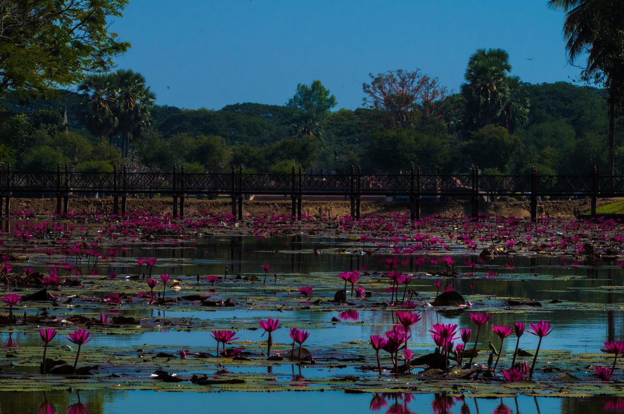 Thailand Sukhothaihistoricalpark Sukhothai Flower Sky Outdoors Nature Water Bridge