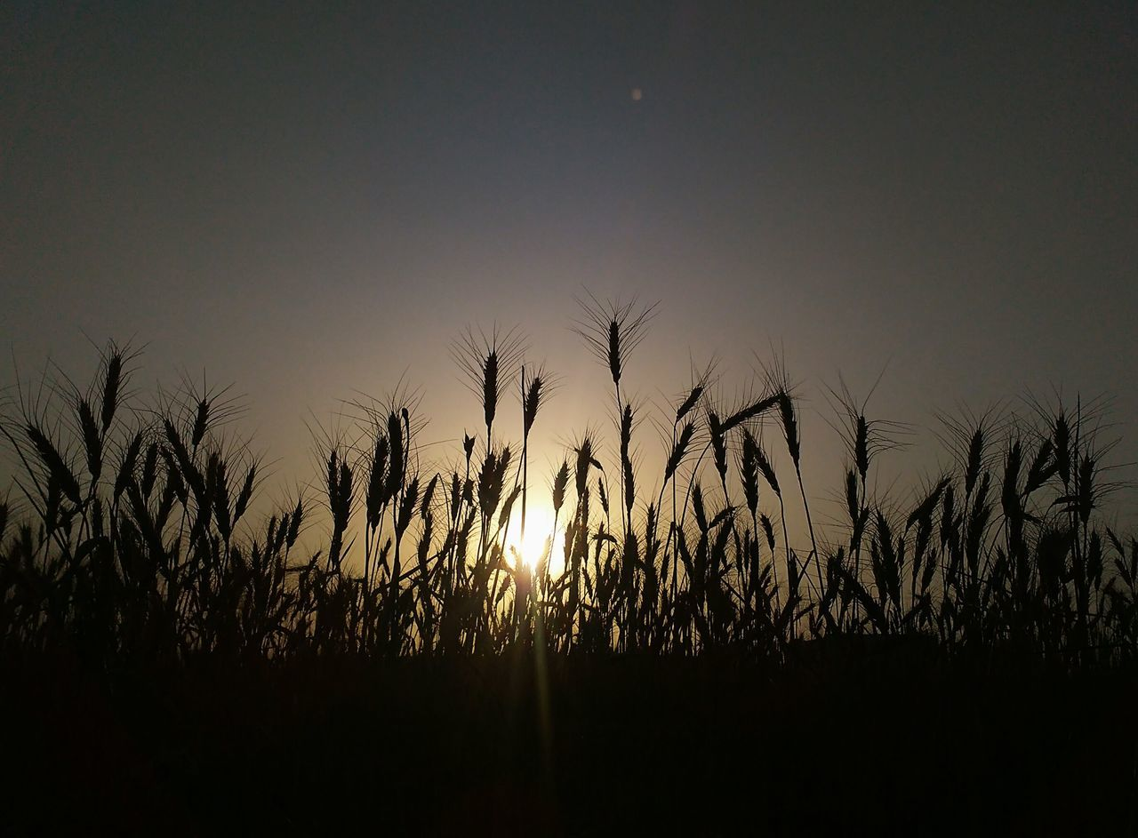 Wheat Sun Sunset Wheat Field Amazing Sunset Wheaties Wheat Grass Wheat Grains Field Of Wheat Evening Light Evening Sky Evening Sunset Evening Sun Evening Glow Evening View Evening Mood Evening Shot Evening Time Evening Photography Evening Lights Evening Colors Evening Out