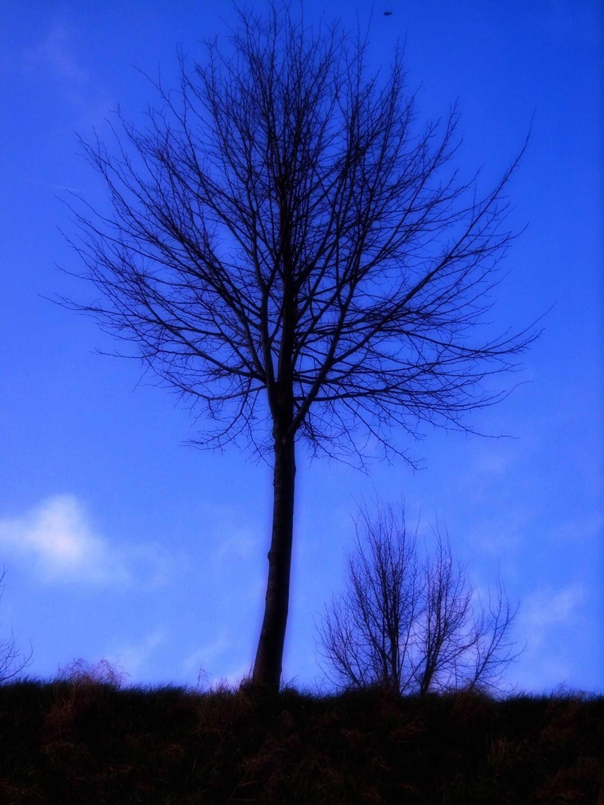 bare tree, tree, blue, branch, sky, tranquility, silhouette, low angle view, tree trunk, tranquil scene, nature, beauty in nature, scenics, growth, field, outdoors, landscape, no people, non-urban scene, dead plant