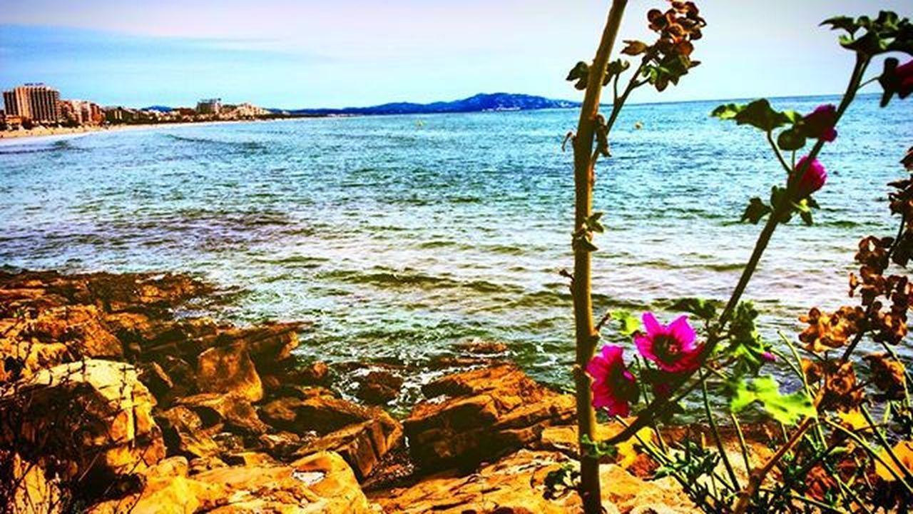 Marinador Playa Flores Desertico Acantilado Rocas Beach Samuelada SPAIN Oropesa Castellón