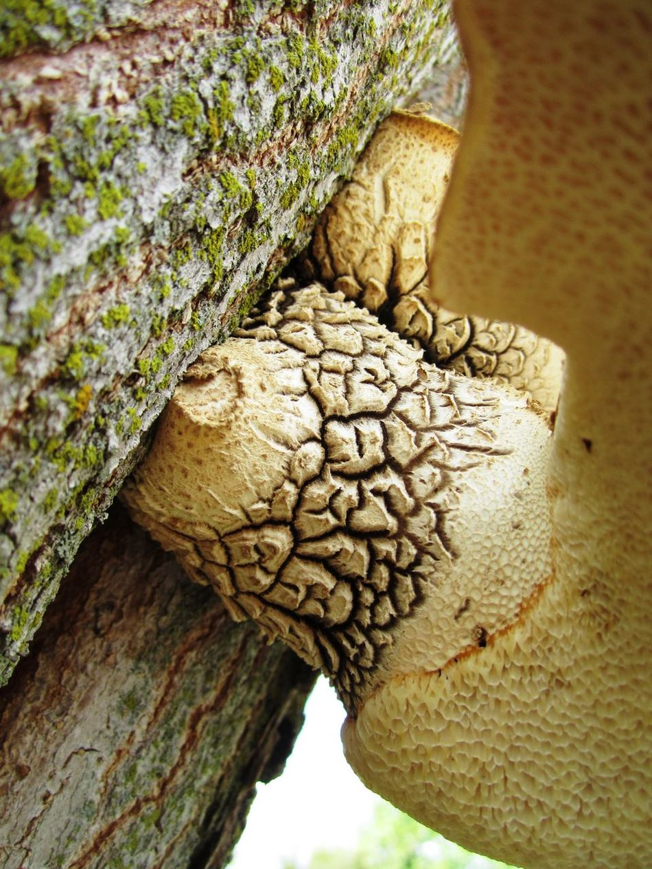 Bark Detail Fungus Mushrooms Patterns In Nature Porous Spongy  Textures And Surfaces