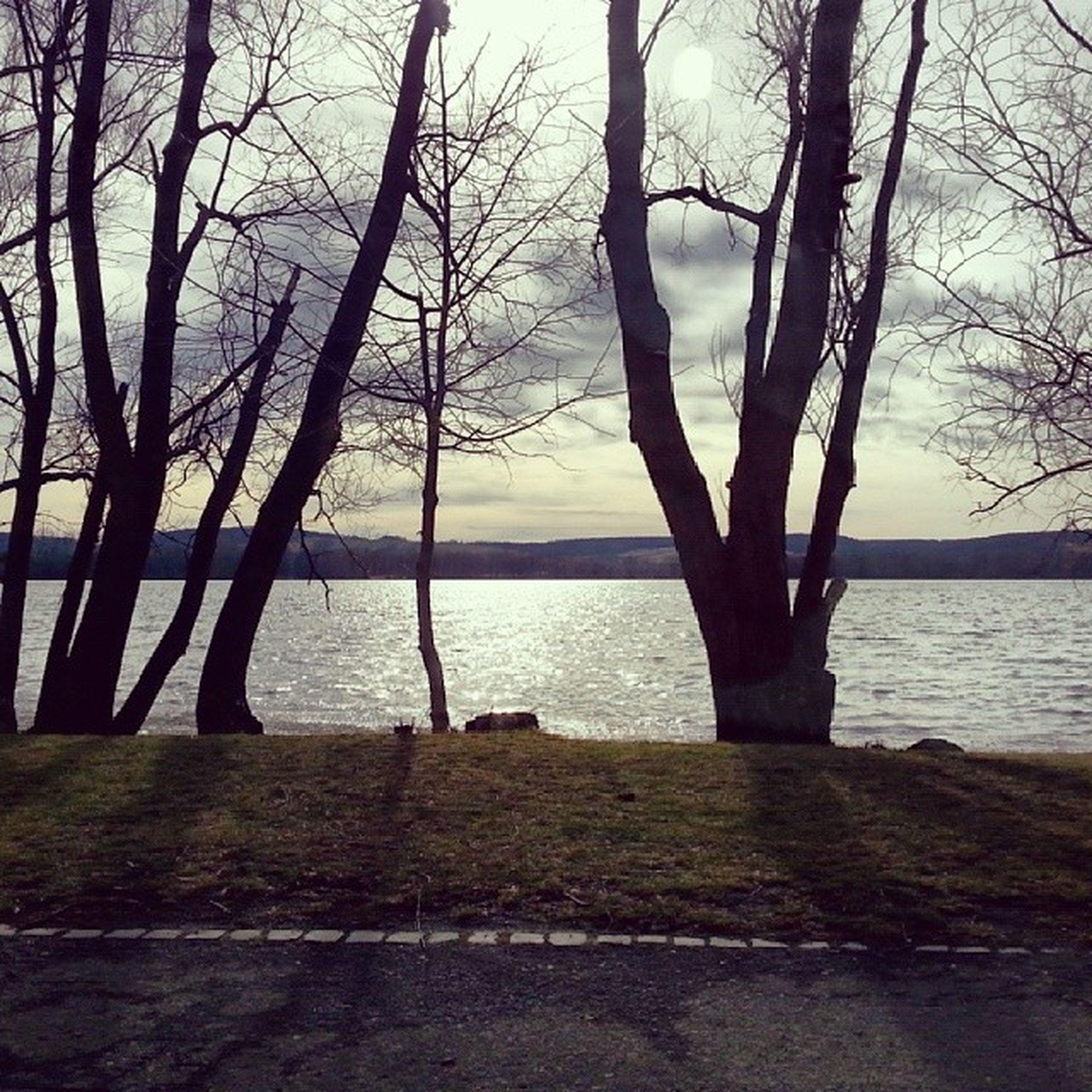 water, tree, tranquility, tranquil scene, scenics, branch, bare tree, beauty in nature, sky, nature, tree trunk, sea, lake, silhouette, horizon over water, idyllic, calm, no people, lakeshore, non-urban scene