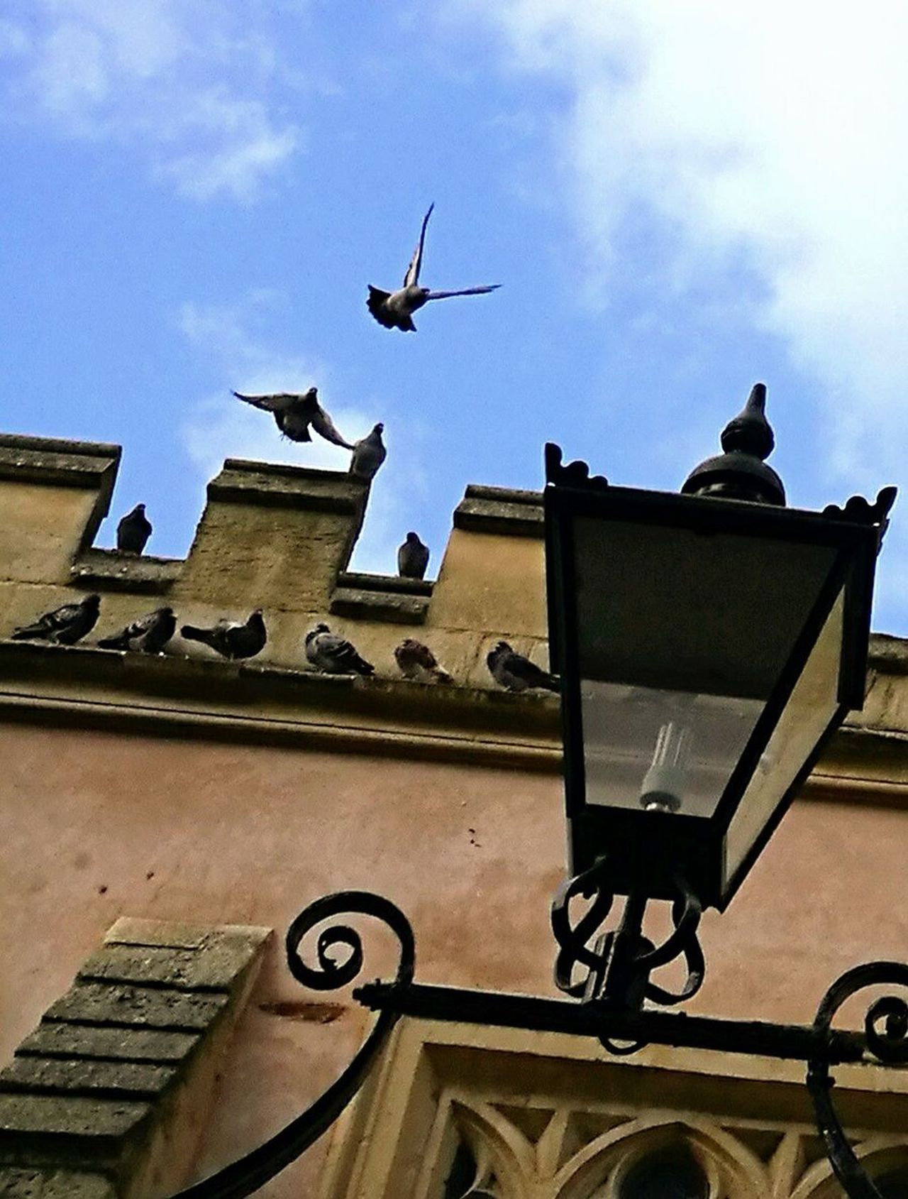 Birds of the city🏙🕊 Adapted To The City Built Structure Church Piegons Low Angle View No People City Day St James Church Birds Architecture Winter 2017 Nature And Architecture In Harmony Urban Views Nature In The City Taking Flight Blue Sky Bristol Uk EyeEmNewHere EyeEm New Here